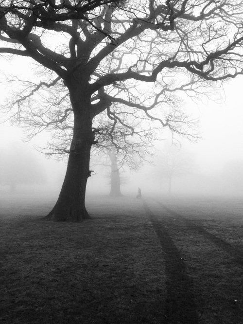 trees-mist-fog-eerie-51000